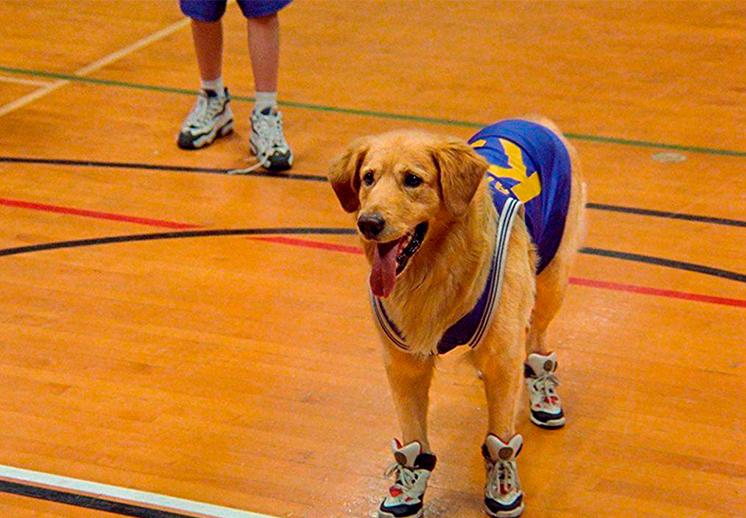 Buddy, el perro basquetbolista que nos robó el corazón